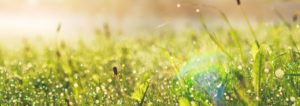 Grünes, saftiges Gras. Erdwärmepumpen der Firma Gerber & Güntlisberger AG.