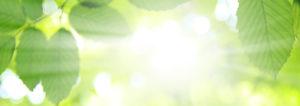 Sonne die durch grüne Blätter durchscheint.