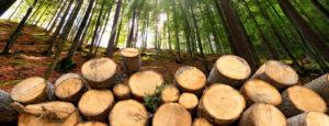 Stückholz im Wald gestapelt. Die Stückholzheizung macht Ihr Zuhause wohlig warm.